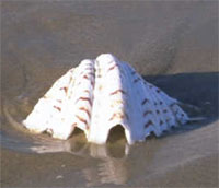 muschel strand