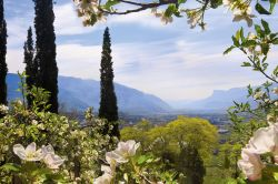 Bild Südtirol Urlaub