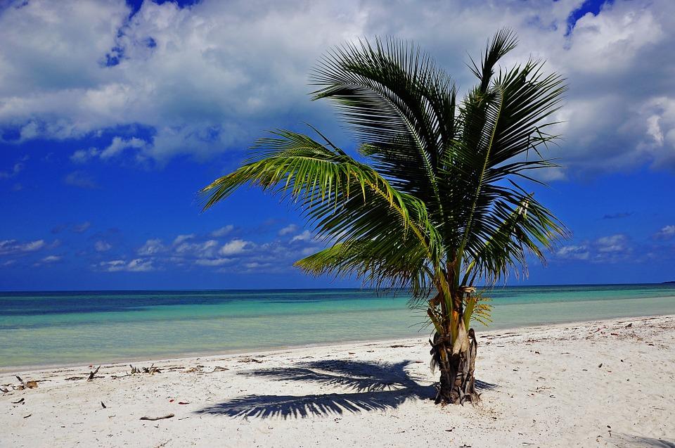 Kuba Palme