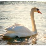 Schwann See